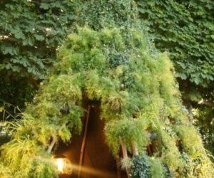 diy teepee garden