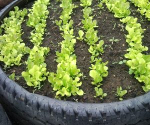 Tire Garden Beds