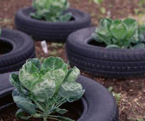 tire vegetable garden ideas