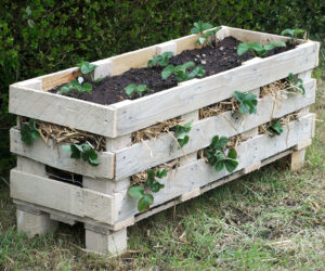 wooden pallet strawberry planter