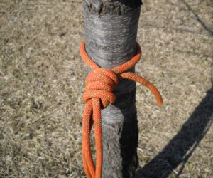 Paracord Hammock Knot