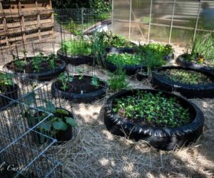 tire potato planters